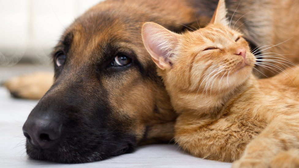 Experience unconditional love from the pets to improve your heart health.